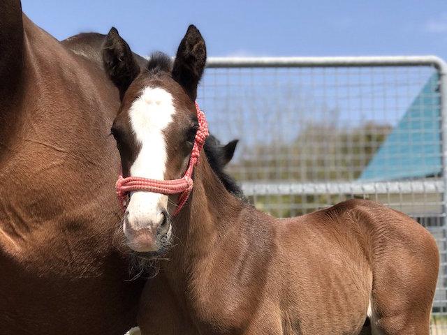 朗報】テイエムオーシャン、ドゥラメンテ産駒を出産 | 競馬まとめざんまい